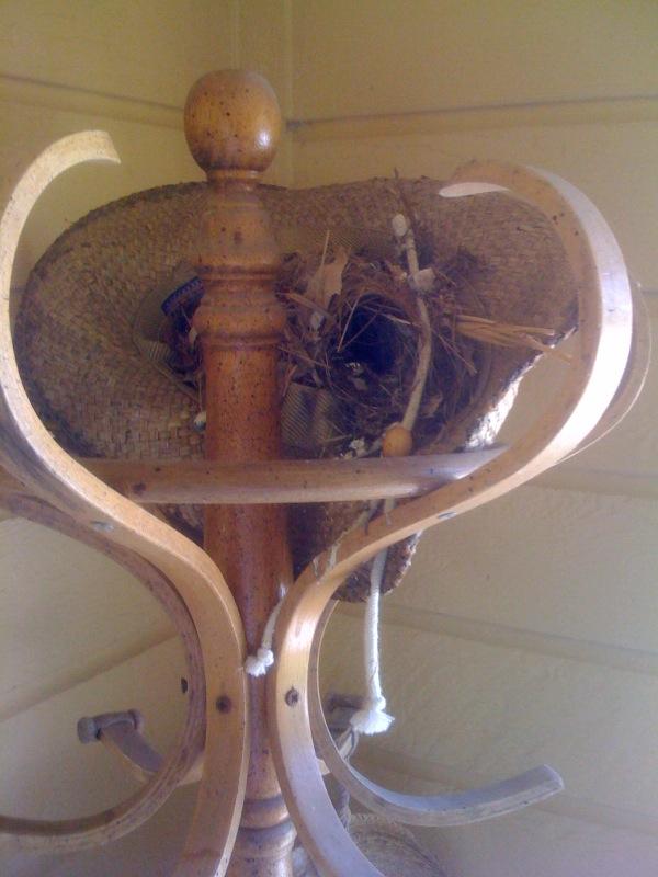 Hat Birds