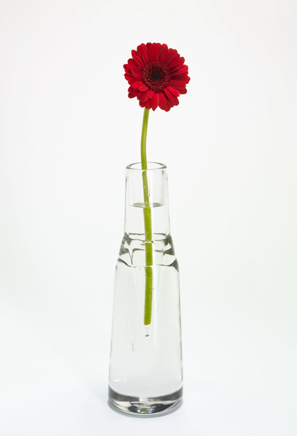 Home Sanctuary Vase Or Vahz