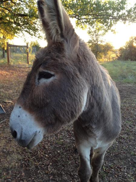 Flash, the Donkey