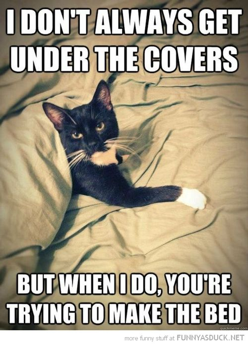Funny-most-interesting-cat-under-covers-making-bed-pics
