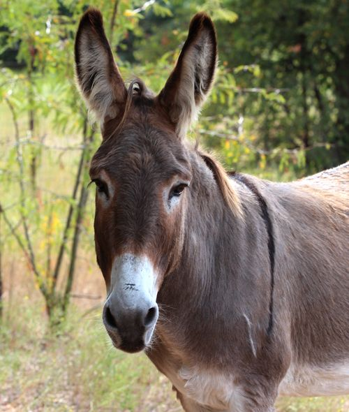 Flash, the rescue donkey