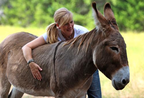Flash, the rescue donkey