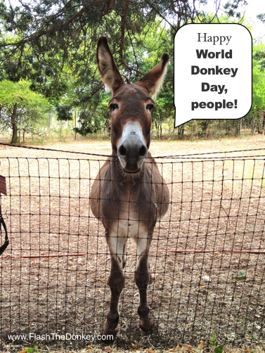 Happy World Donkey Day