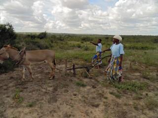 11-26-13-Donkeys-1-320x240
