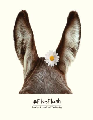 #FlatFlashEars