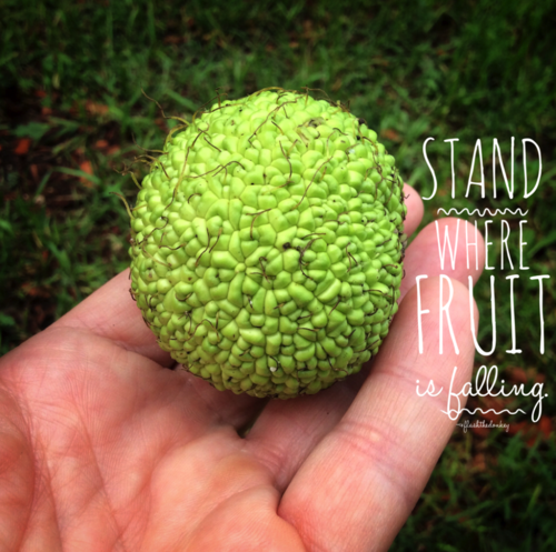 Stand where fruit is falling.