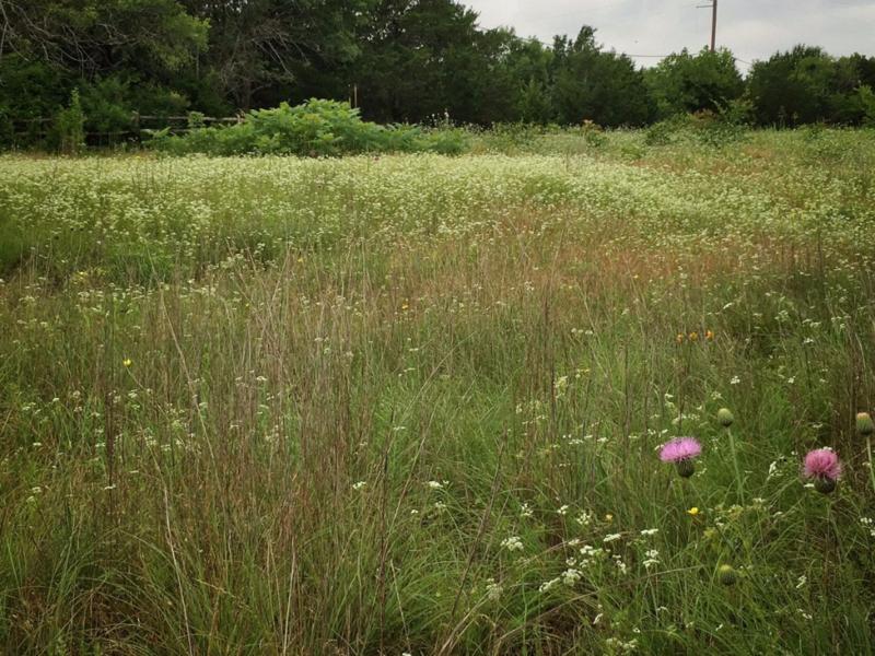 wildflower fiels