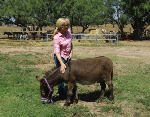 Henry the donkey, Rachel Anne Ridge