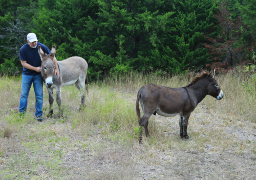 Flash the donkey and Henry