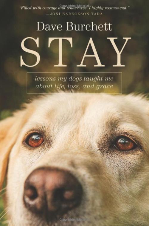 Stay by Dave Burchett