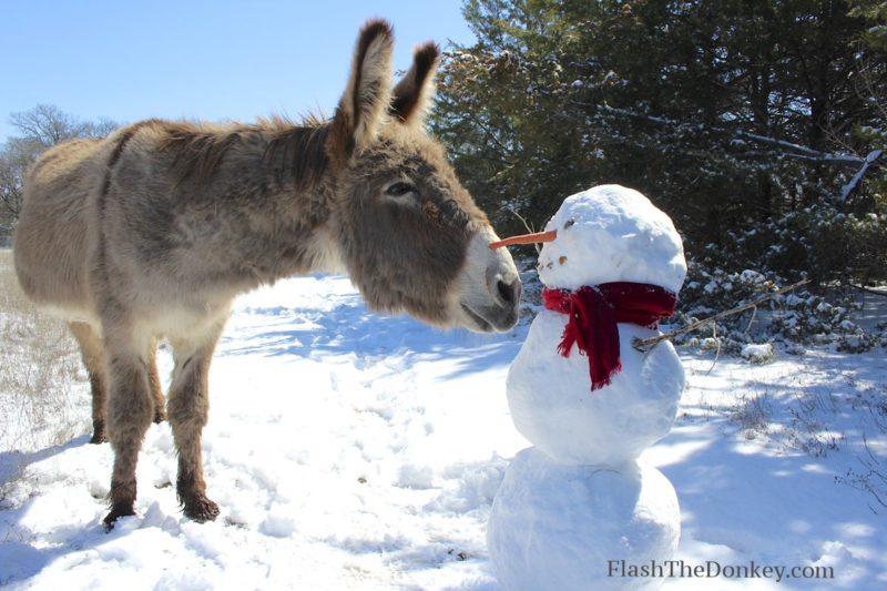 Flash the donkey snowman