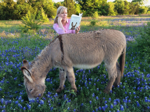 Flash the donkey new book