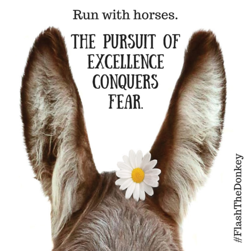 Flash the donkey - pursue excellence
