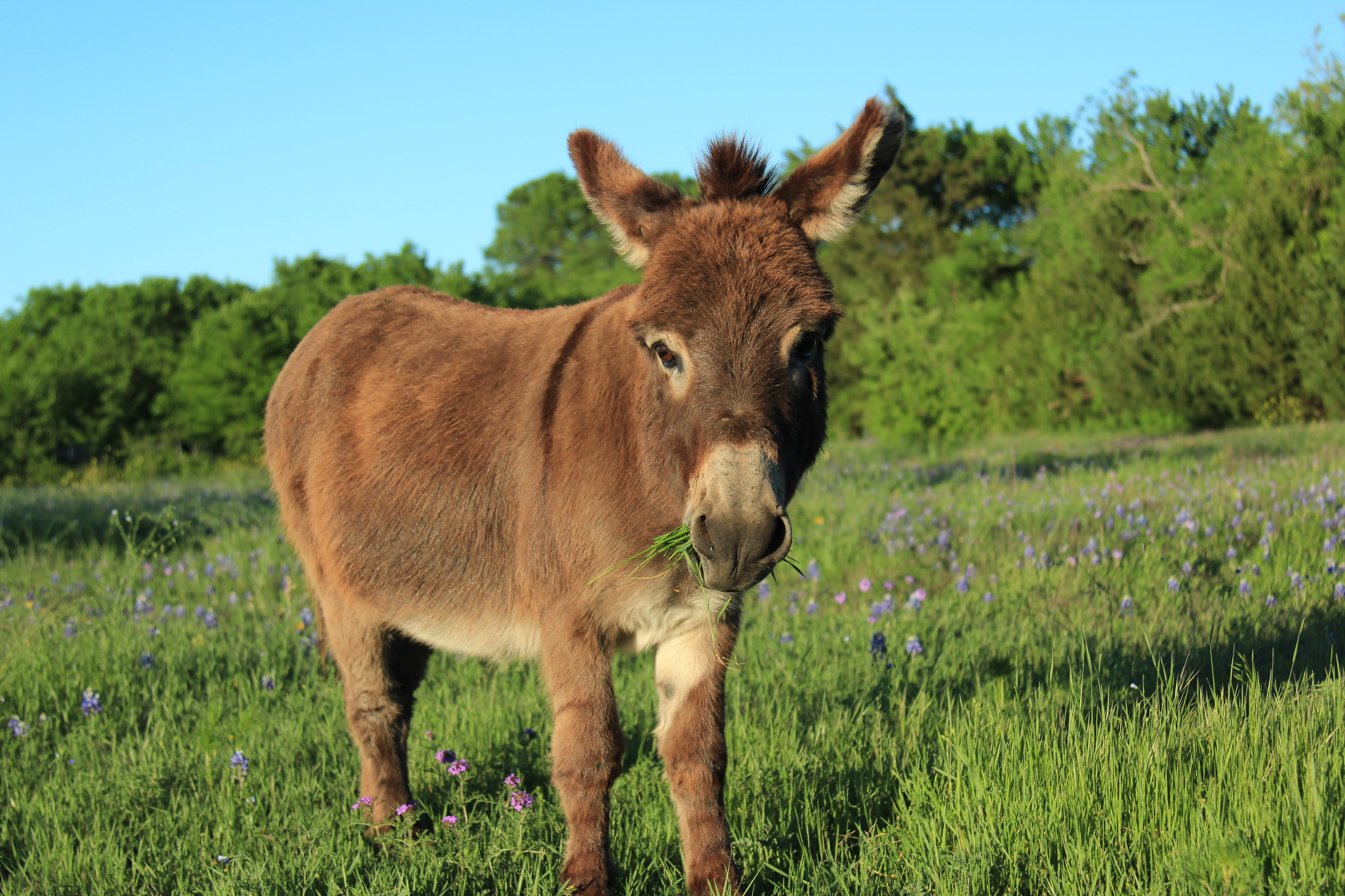 Home Sanctuary: Flash the Donkey