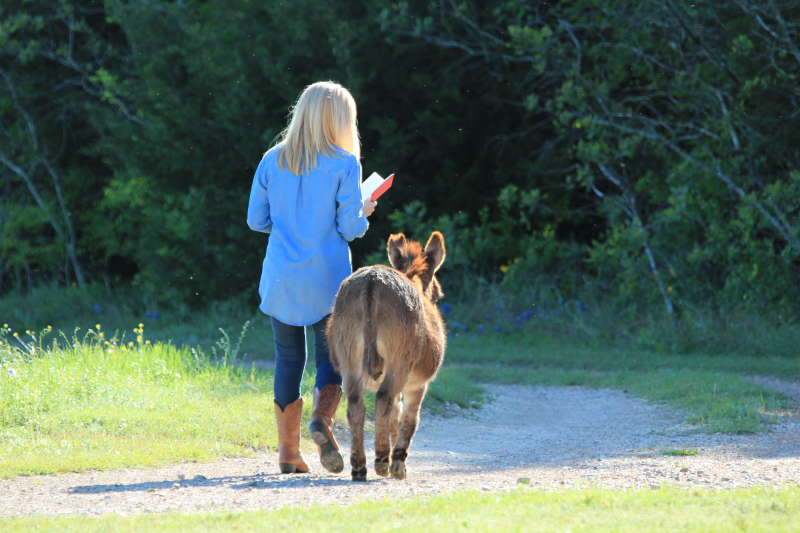 Walking with Henry the donkey